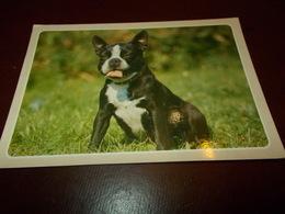 B713  Cane Non Viaggiata - Cani