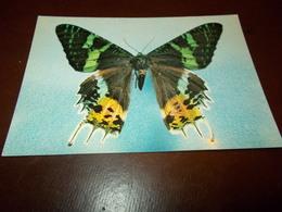 B713  Farfalla Non Viaggiata - Farfalle