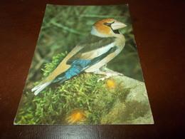 B713  Uccello Non Viaggiata - Uccelli