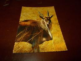 B713   Antilope Alcina Non Viaggiata - Animali