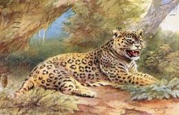 George  Rankin  -  A Jaguar.    -    3573 - Tigres