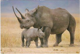 D1075 KENYA - BLACK RHINO AND BABY - RHINOCEROS NOIR ET SON BEBE - Rhinocéros