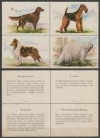 Terrier Collie Komondor Irish Setter - DOG DOGS - Hungary 1960's Offset PRESS - Poster LABEL CINDERELLA VIGNETTE - Chiens