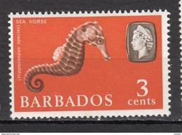 Barbade, Barbados, Hippocampe, Hippocampus, Cheval De Mer, Sea Horse, Poisson, Fish, élizabeth II - Poissons