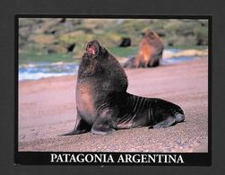 ANIMAUX - ANIMALS - LOBO MARINO DE UN PELO - SOUHT SEALION - PATAGONIA ARGENTINA - FOTO ALBERTO PATRIAM - Animaux & Faune