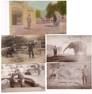 LOTE X 5 PHOTOS ZOO BUENOS AIRES CIRCA 1920s CUIDADOR DE ANIMALES ANIMAL CARETAKER - BLEUP - Plaatsen