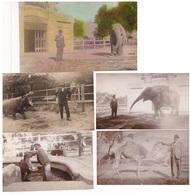 LOTE X 5 PHOTOS ZOO BUENOS AIRES CIRCA 1920s CUIDADOR DE ANIMALES ANIMAL CARETAKER - BLEUP - Places