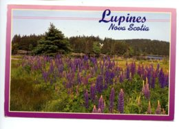 Piece Sur Le Theme De Canada - Lupines - Nova Scotia - Voyagee - Canada