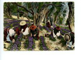 Piece Sur Le Theme De La Cote D Azur - La Cueillette Des Violettes - 1950 - 1960 - France