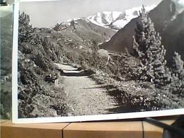 SUISSE SVIZZERA SWITZERLAND -SCHWEIZ  Hohenweg Mit Piz Palu VB1957 HA8028 - GR Grisons