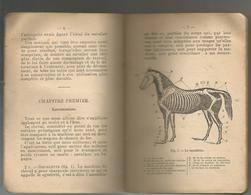 COURS ABREGE D HIPPOLOGIE A L USAGE DES SOUS - OFFICIERS .... - Livres