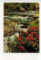 Piece Sur Le Theme De Saint Martin Vesubie - Floraison Des Rhododendrons - France