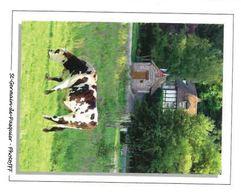 CP Saint Germain De Pasquier (27) Pays Du Roumois Vache Devant La Plus Petite Mairie De France - Sonstige Gemeinden