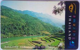 300 Baht Traditional Rice Paddies - Thaïlande