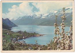 Norge - Sorfjorden, Hardanger. Ullensvang Mot Folgefonnen - Glacier - (Norway) - Noorwegen