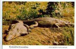 REPTILE / CROCODILE / ENTIER POSTAL AFRIQUE DU SUD / SUDWEST AFRIKA / STATIONERY / - Reptiles & Batraciens