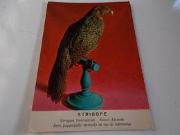 B716  Strigope Pappagallo Museo Storia Naturale Torino Non Viaggiata - Uccelli