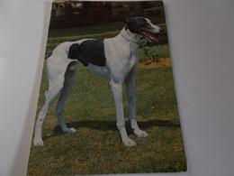 B716  Cane Non Viaggiata Macchie Al Retro - Cani