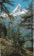 Täsch Bei Zermatt Ak137478 - Schweiz