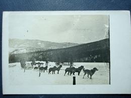 Militaria ,carte Photo à Situer ,attelage Chiens De Traineaux Pour Ravitaillement De Montagne ...1917 - Guerre 1914-18