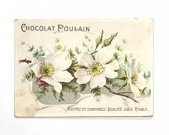 Chocolate Trading Card / Chromo - Chocolat Poulain - Flowers - - Poulain
