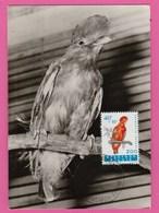 Carte Maximum - Oiseaux - Coq De Roche - Belgique - Oiseaux