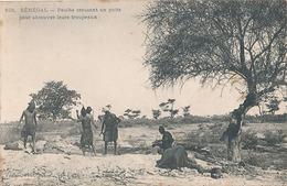 SENEGAL - N° 501 - PEULHS CREUSANT UN PUITS POUR ABREUVER LEURS TROUPEAUX - Sénégal