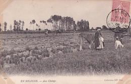 EN SOLOGNE        AUX CHAMPS - Centre-Val De Loire