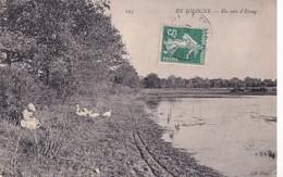 EN SOLOGNE        UN  COIN D ETANG . - Centre-Val De Loire