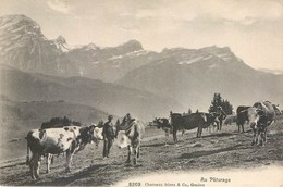 CPA Suisse Canton De Vaud VD Chesières 1915 Au Paturage - VD Vaud