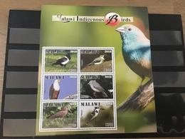 Malawi - Postfris / MNH - Sheet Vogels 2018 - Malawi (1964-...)