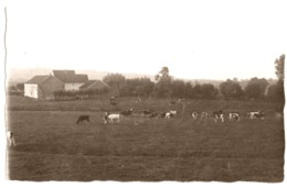 à Situer Agriculture Ferme Probablement Dans Le Pays De Herve Aubel Vers 1920 - Cartes Postales