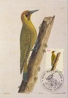 VATICAN 1989 Max Card With Woodpecker.BARGAIN.!! - Spechten En Klimvogels