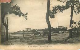 Dép 17 - Animaux - Vaches - Royan - Conche De Naussan - Braun N° 60 - 2 Scans - état - Royan