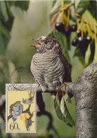 CZECHOSLOVAKIA 1972 Max Card With Cuckoo.BARGAIN.!! - Coucous, Touracos