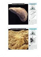 Lot 6 - Fiche Illustree - Coquillage Mollusque Turrilite Ammonite Escargot Calmar Seiche Seiche - Animaux