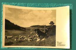 Paysage De Printemps De Pâques Chien De Berger Tchèque - Cani