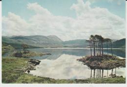 Postcard - Loch Assynt, Near Lochinver, Sutherland - Card No..3641  - Unused Very Good - Postcards