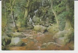 Postcard - Becky Falls, Nr Manaton, Devon - Card No. Psd25631  - Unused Very Good - Postcards