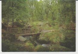 Postcard - Becky Falls, Nr Manaton, Devon - Card No. Psd25630  - Unused Very Good - Postcards