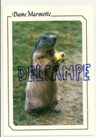Dame Marmotte. Editions CELLARD - Animaux & Faune