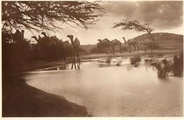 LIBIA-BUR HACABA-DROMEDARI - Somalie