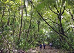 1 AK American Samoa * Ansicht Der Insel Swains * - Amerikanisch Samoa