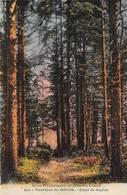 Forêt De Sapins Montagnes Du Doubs CLB 950 Colorisée Thème Bois Arbres Arbre - Other Municipalities