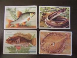 Lot De 32 Petites Images (8 X 5,8 Cm Environ) Illustrées Sur Le Thème Des Poissons - Toutes Différentes - Animaux