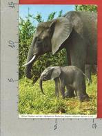 CARTOLINA VG ZAMBIA - Elefante Africano Con Cucciolo - 10 X 15 - ANN. 1971 - Zambia