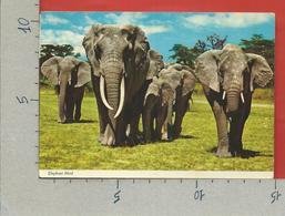 CARTOLINA VG TANZANIA - Elephant Herd - 10 X 15 - ANN. 1979 - Tanzania