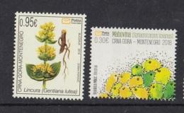 2.- MONTENEGRO 2018 Flora 2018 - Gentiana Lutea And Sphaerocarpos Texanus - Montenegro