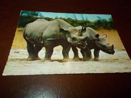 B716  Rinoceronti Non Viaggiata - Rinoceronte