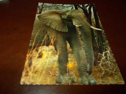 B716  Elefante Non Viaggiata - Elephants